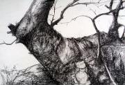 Mike Woollacott Drawing