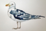 Helen Lee – Black Backed Gull