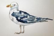 Helen Lee – Black Backed Gull
