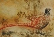 Helen Lee - Pheasant