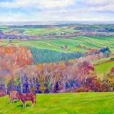 Jon Lincoln Gordon Higher Hacknell cows