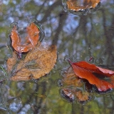 Laura Alexandra Tacey - Nature's Treasures