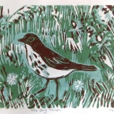 Louise Thompson - Song Thrush