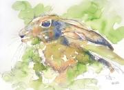 Robert Walker Young Hare