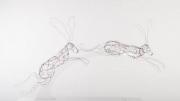 Ruth Bateman - 'Hare study'